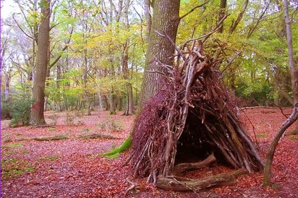 kỹ năng sống trong rừng