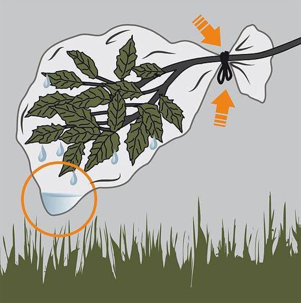 Sử dụng túi nilong ky nang sinh ton trong rung
